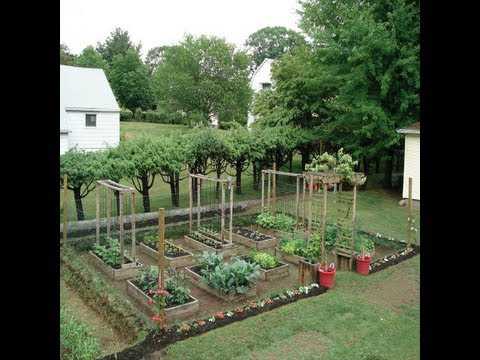 aimanu0027s mom backyard garden: grow your own organic vegetables u0026 ideas - MVRHQDH