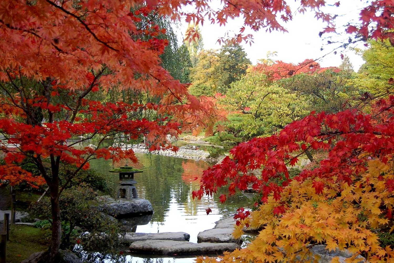 autumn at the seattle japanese garden LLCJZEP