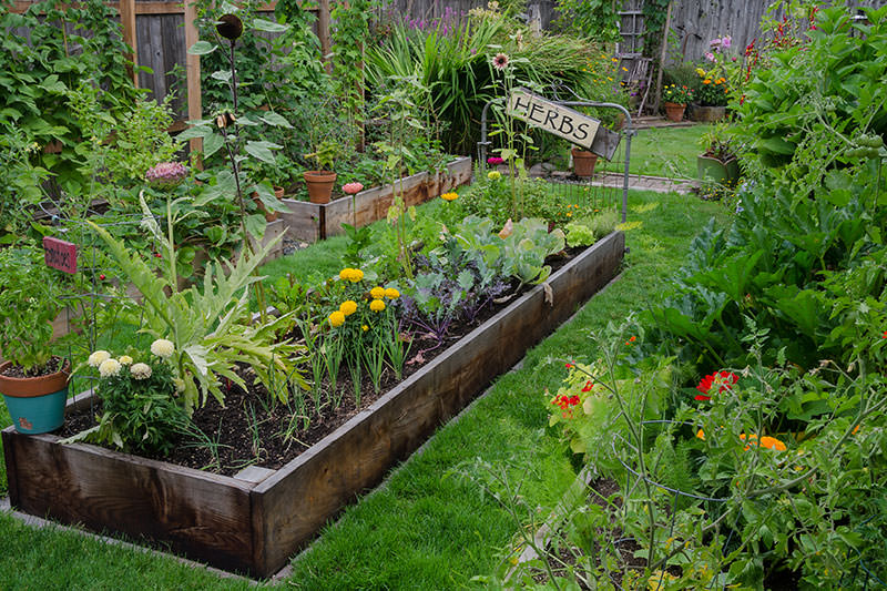 backyard garden are backyard gardens a weapon against climate change? KXWUEHG