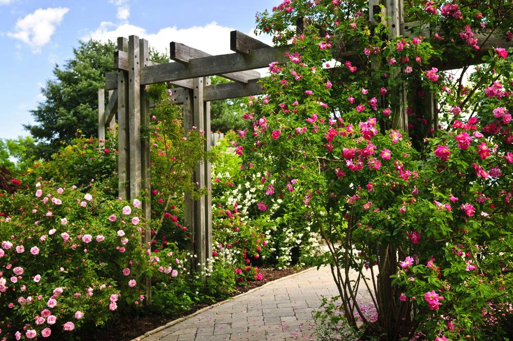 backyard garden ideas 11. flowers with pergola RIKBQFU