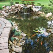 backyard ponds everything you need to know to build the perfect backyard pond UQBDNWX