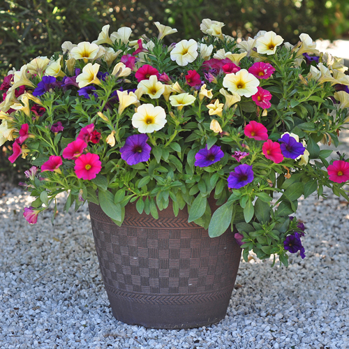 container gardening ideas 2: the power of one TYFITZY