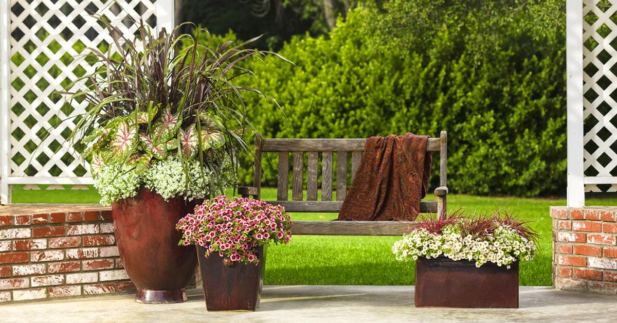 container gardening ideas thriller spiller filler diy DBIXASA