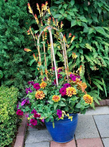 container gardening ideas vines so fine. vines can give your container garden ... ZMFCERL