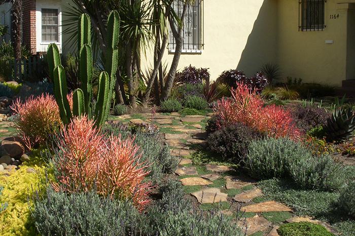 drought resistant landscaping ... drought tolerant landscape design los angeles   garden of eva DOGHVWN