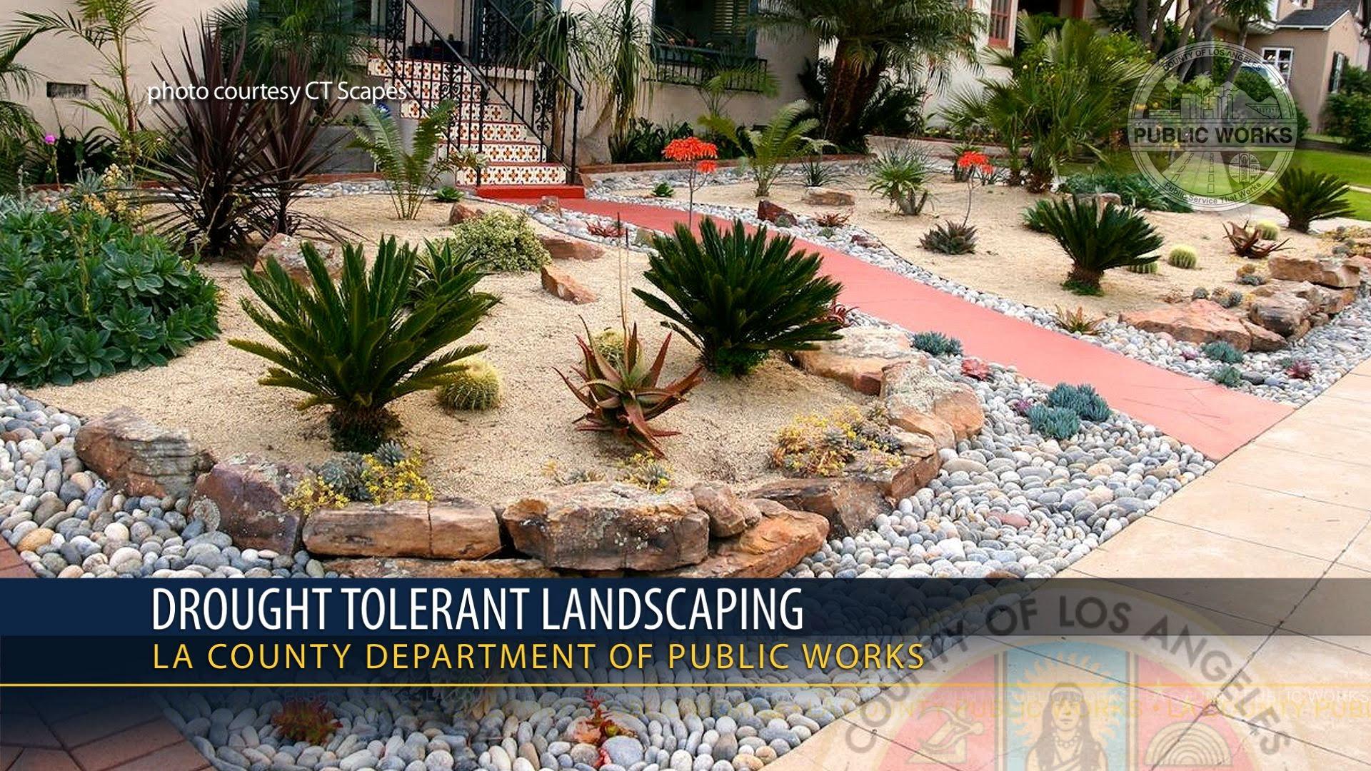 drought resistant landscaping psa - drought tolerant landscaping - youtube YLDZCSG