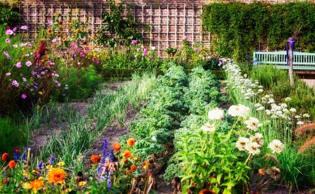 edible landscaping: a delicious way to garden GOFMQBU