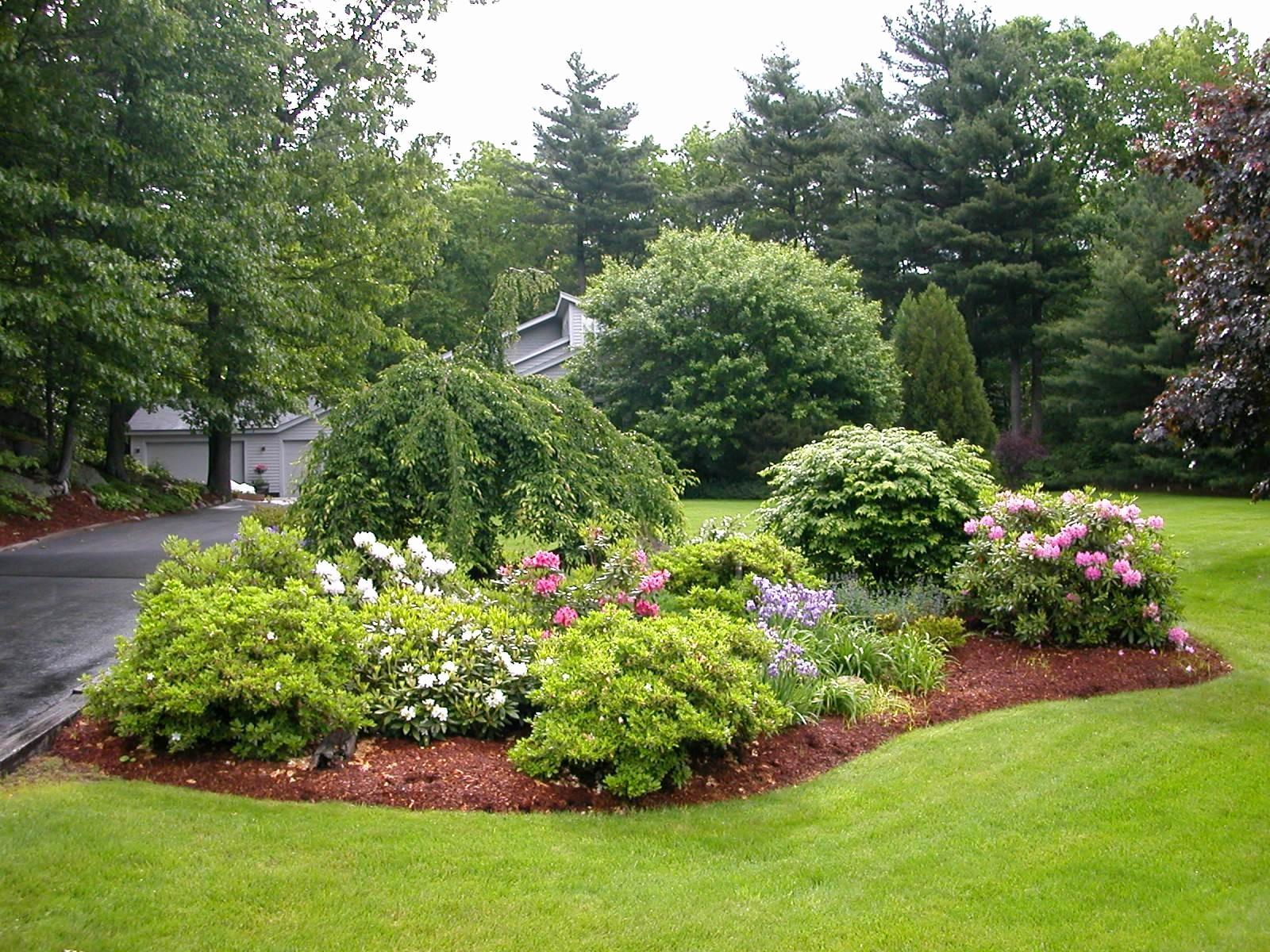 evergreen landscaping style ideas AMALOVS
