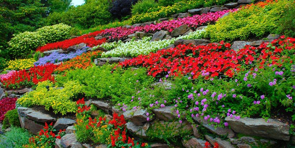flower garden designs colorful flowers, terraced hillside garden design calimesa, ca MLBZOQS