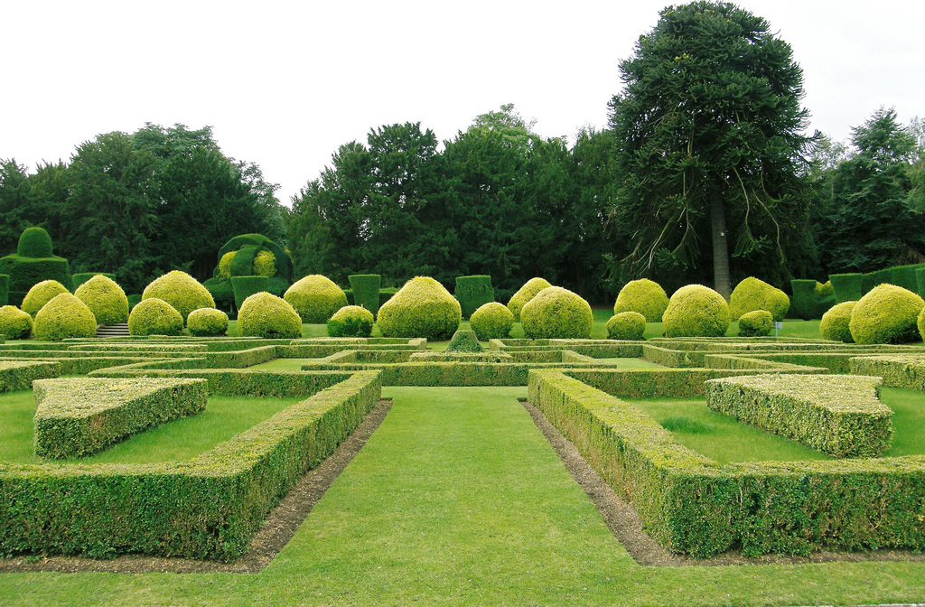 garden hedges ... gardens and nature around us are being swallowed by the concrete XMFHMCZ