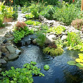 garden pond caring for garden ponds OUBPKEX
