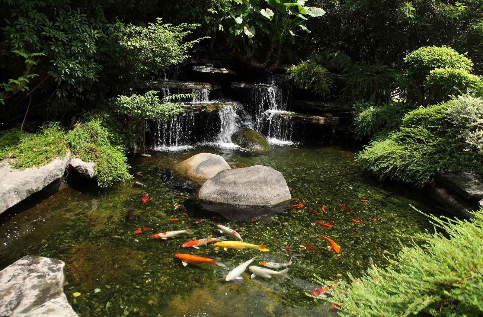 garden ponds albany, plattsburgh u0026 burlington vt outdoor water gardens u0026 waterfalls: koi EFDPGLN