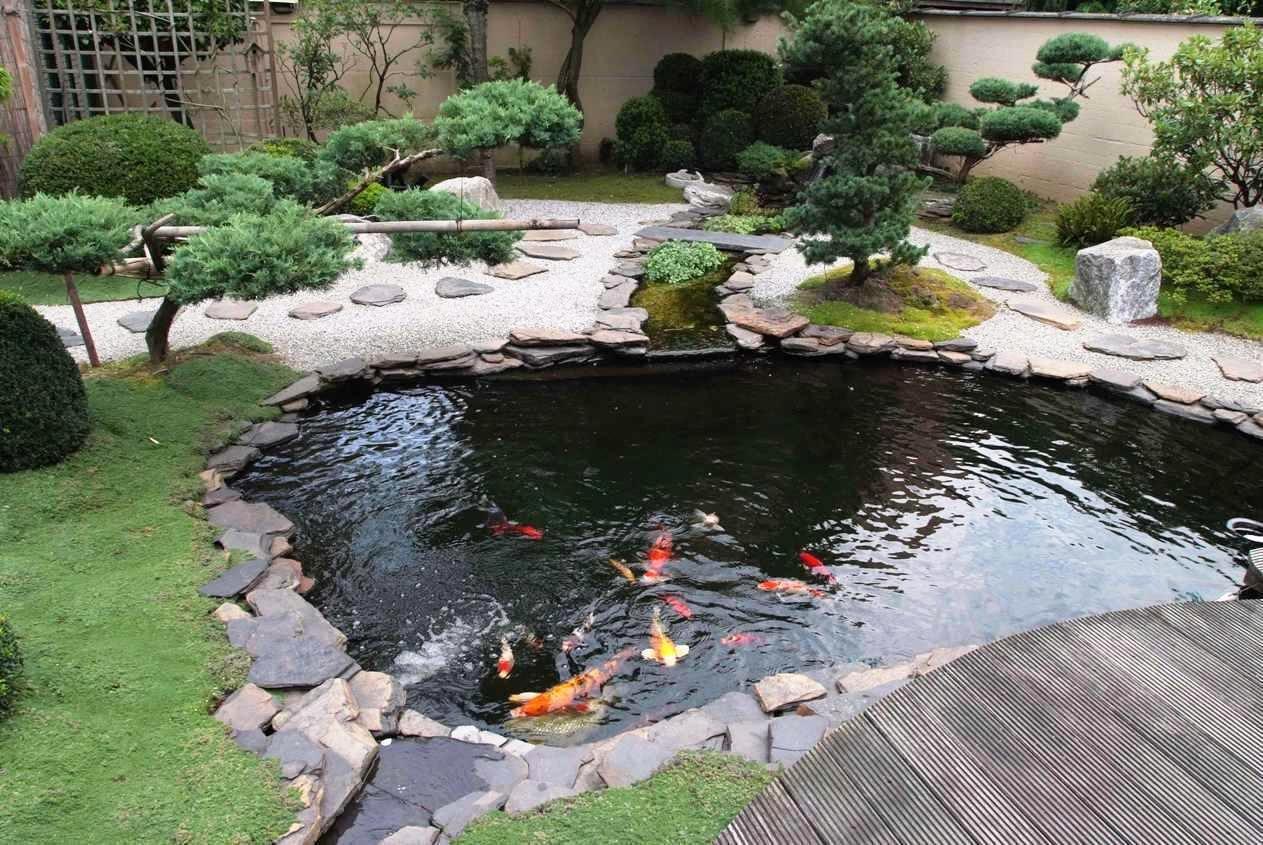 garden ponds small koi fish in garden for ponds design ideas - youtube QREHMDX