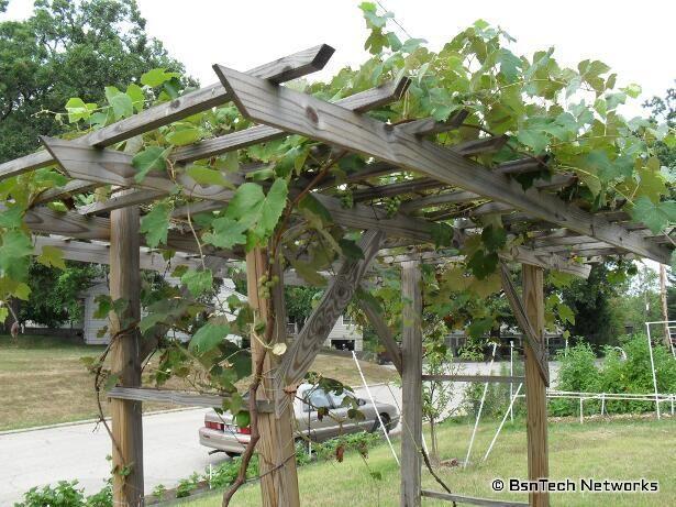 grapevine trellis designs   grape arbor designs steel strong end post SNVELEY