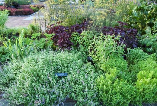 herb gardens ... growing an herb garden ... KEGAQWS