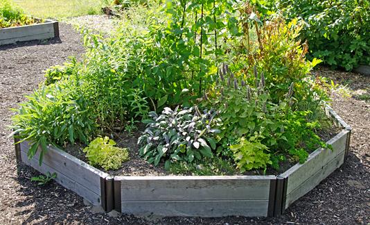 Benefits of having the herb gardens