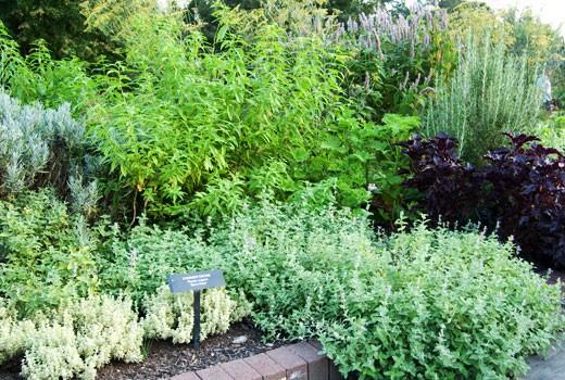 herb gardens herb gardening; how to grow herbs ... SORFQZH