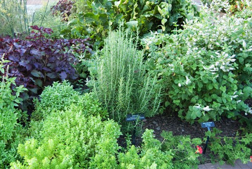 herb gardens herb gardening ZIFQMFB