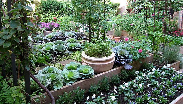 kitchen garden a cooku0027s garden looks good and tastes even better. TPWOMVA