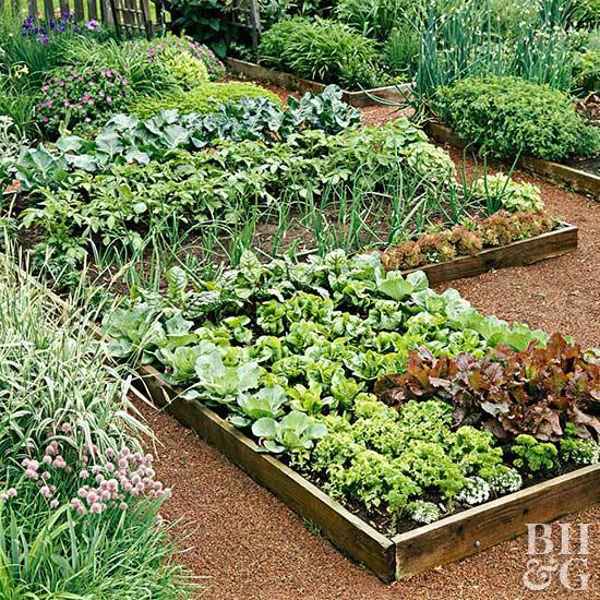 kitchen garden raised vegetable garden beds DRRGTXC