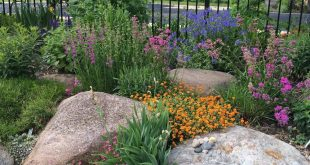 landscaping with rocks mix large rocks with flowers in beds. CLXRQCJ