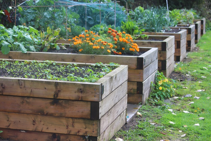raised bed gardening 14 reasons why raised beds are the best way to garden ROEJBPX
