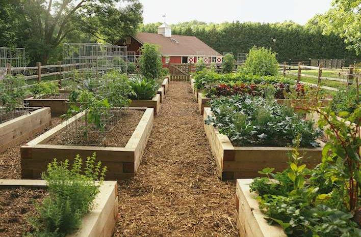 raised bed gardens gardenfarm raised beds UZAEZXA