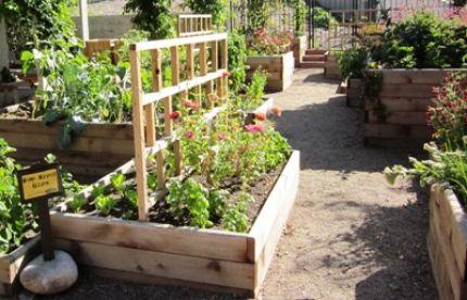 raised bed gardens the home harvest garden, part of the mordecai childrenu0027s garden, features DRHULTP