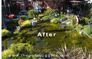 Great pond design ideas for your garden