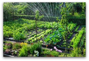 vegetable garden design watering a garden MWFVPFZ