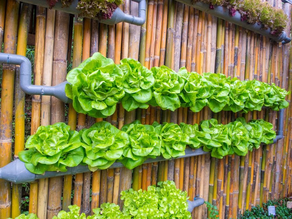 vertical garden ideas vegetable in decorated wall vertical garden idea in the city MJQBPBT