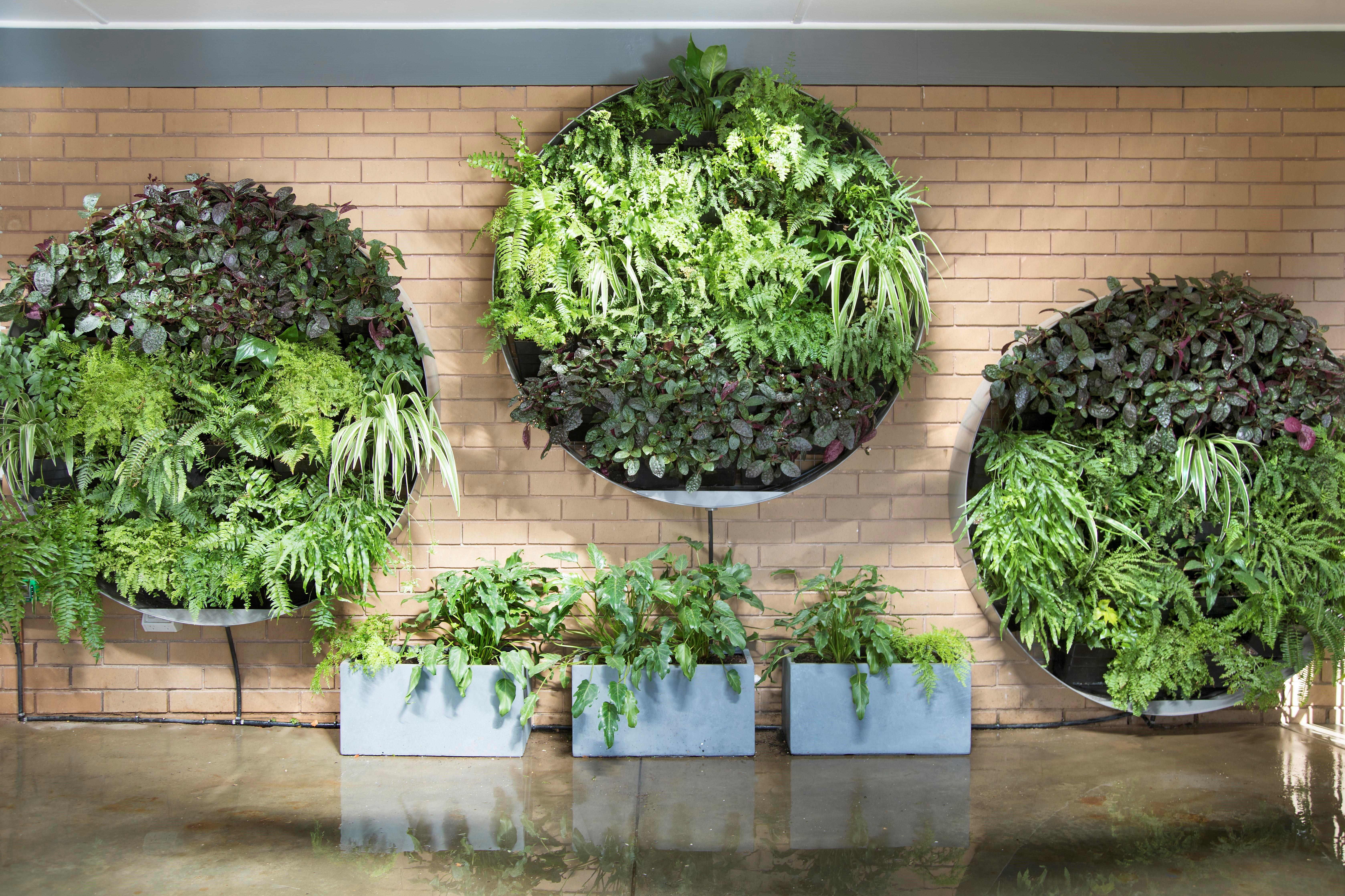 vertical garden vg 52 - as seen on buying blind NGOSWIU